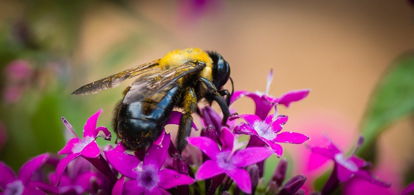 April Showers Bring Bees & Flowers